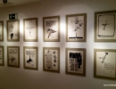 Exposición MGEC. Manolo Miralles