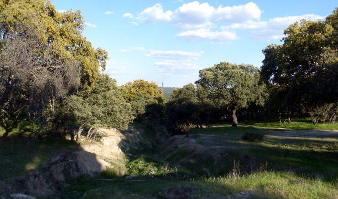 Monte de El Pardo
