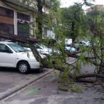 Árbol caído en el Barrio del Pilar