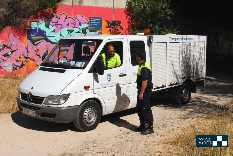 Policía Municipal. Transporte de animales