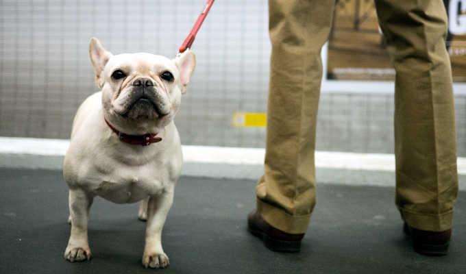 Los perros podrán acceder a la red de Metro