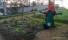 Fuencarral-El Pardo dispondrá de tres nuevos huertos urbanos en Montecarmelo, Las Tablas y Tres Olivos